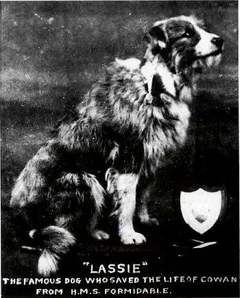 LassieW350