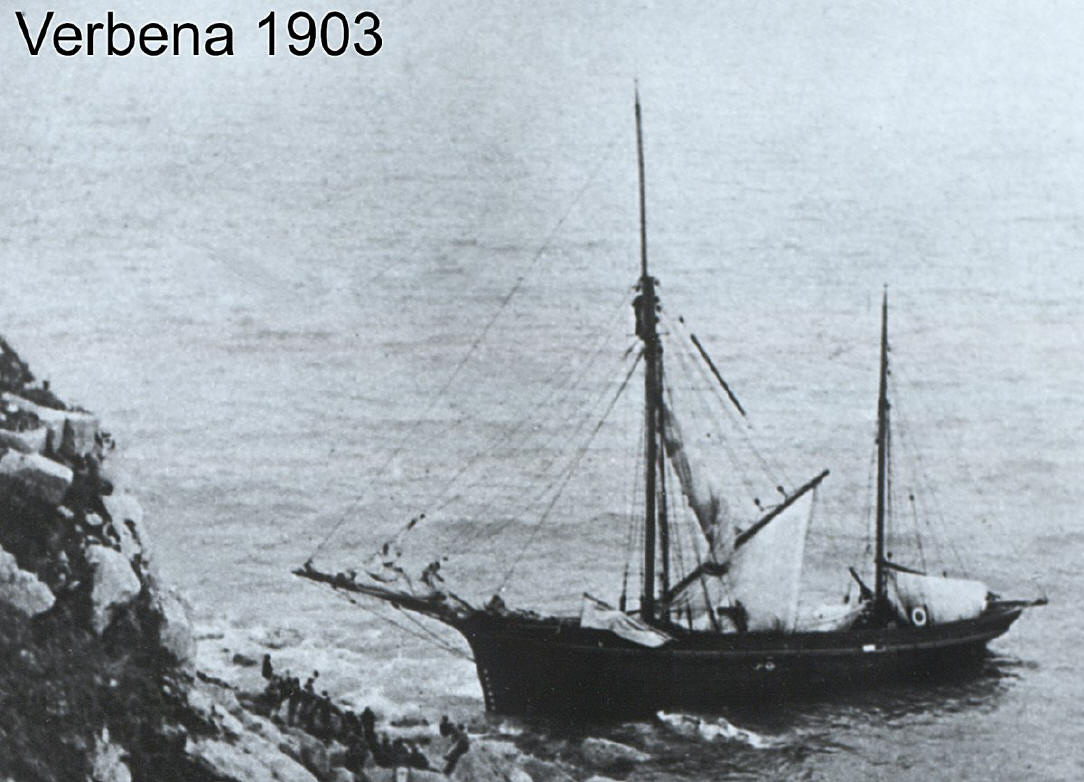 Verbena1200