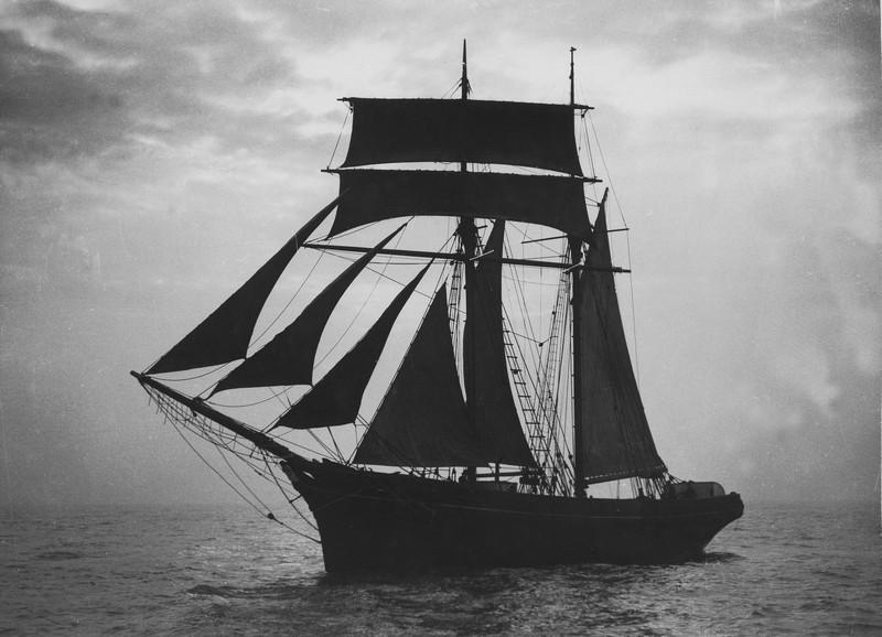 q_ships amy
