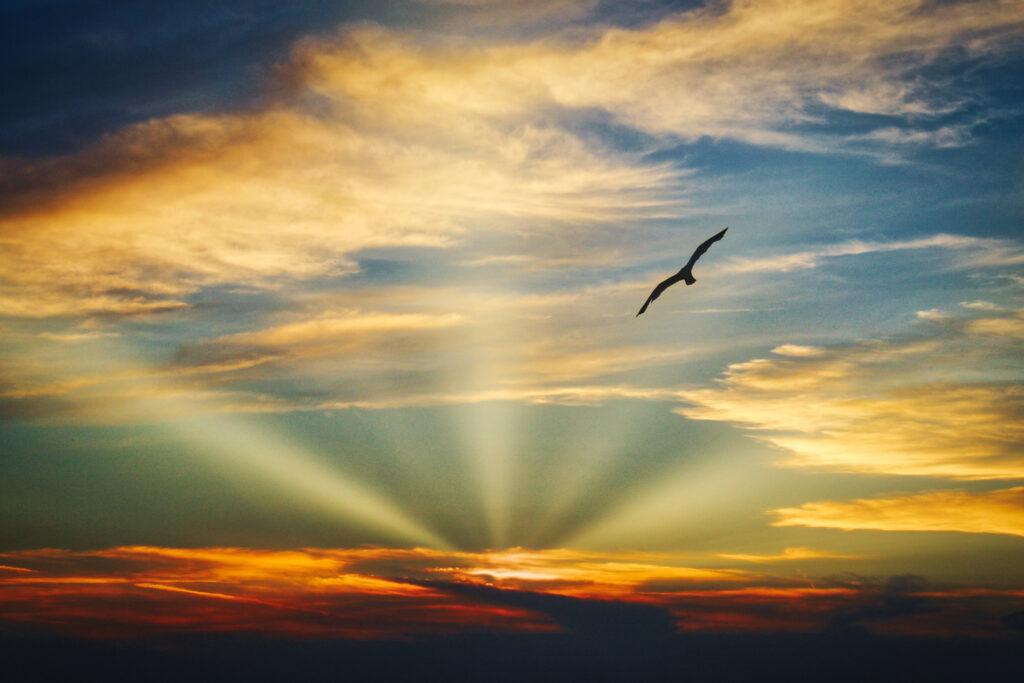 """""""Bird in the sky"""" 1"""